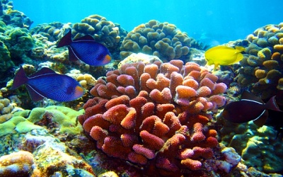 Diving sites In Aqaba - Black rock