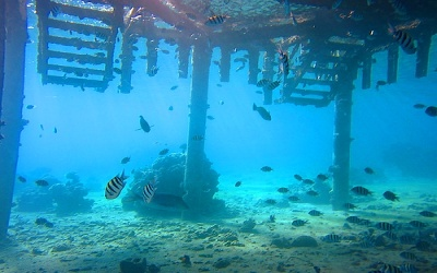 Diving sites In Aqaba - Tarmac Five