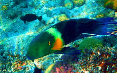 Diving sites In Aqaba - Rainbow Reef