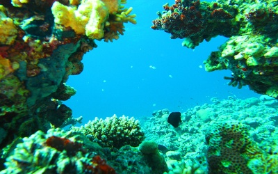 Diving sites In Aqaba - Coral Garden